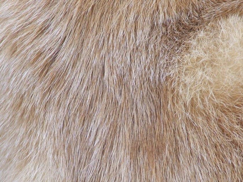 Stella's fur
