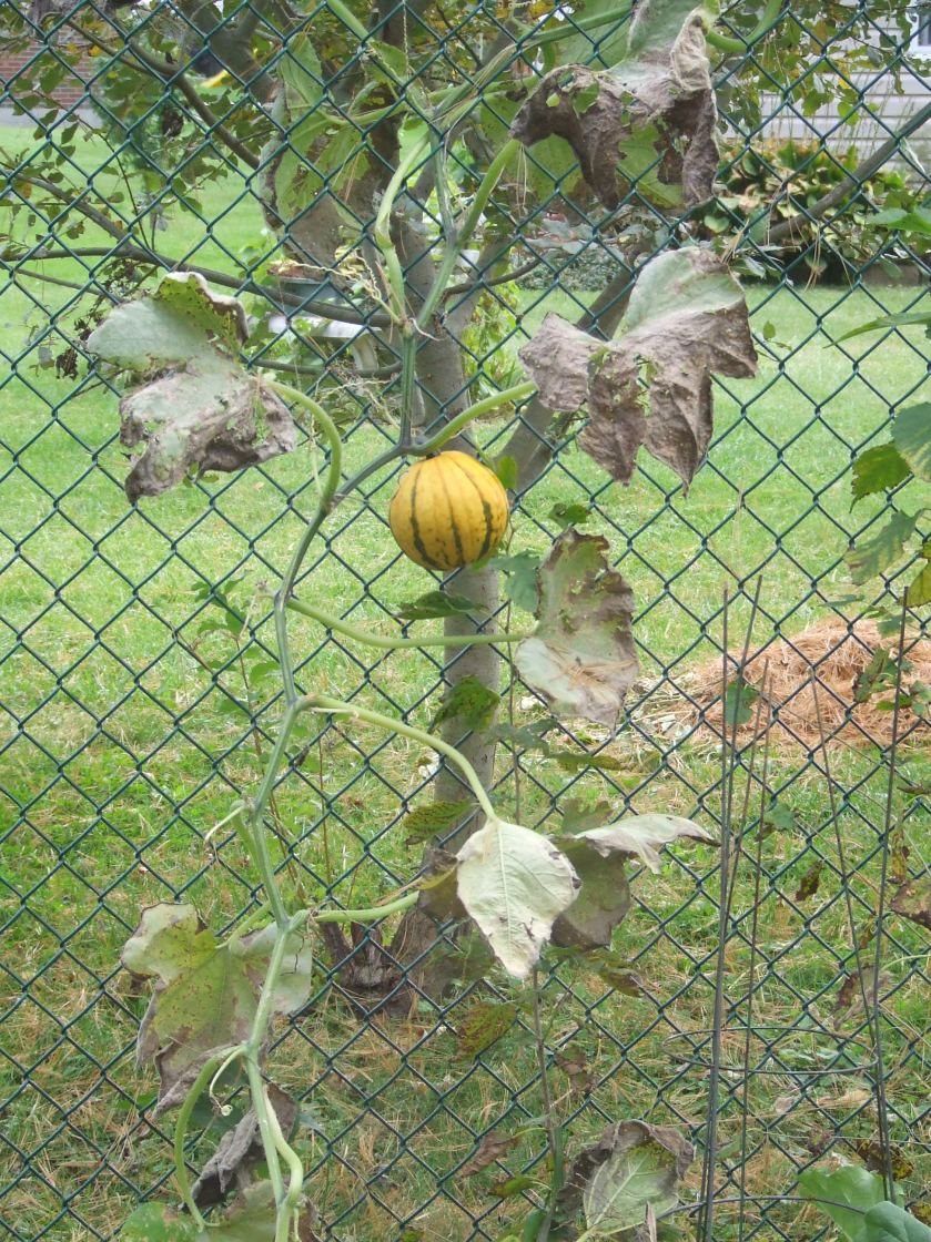 What the gourd is it?