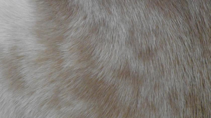 The art of fur