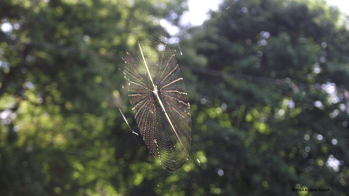 Gossamer, ephemeral beauty