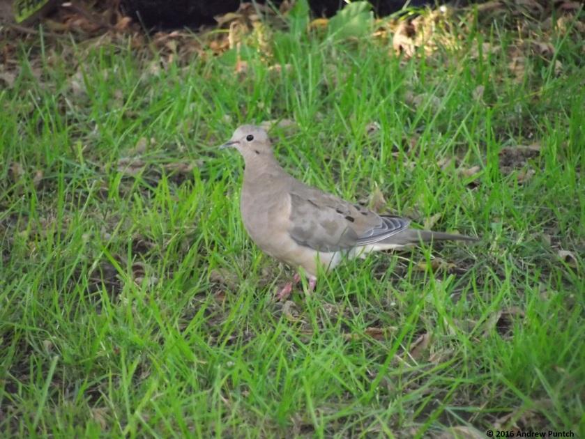 2016-09-bird05-copy