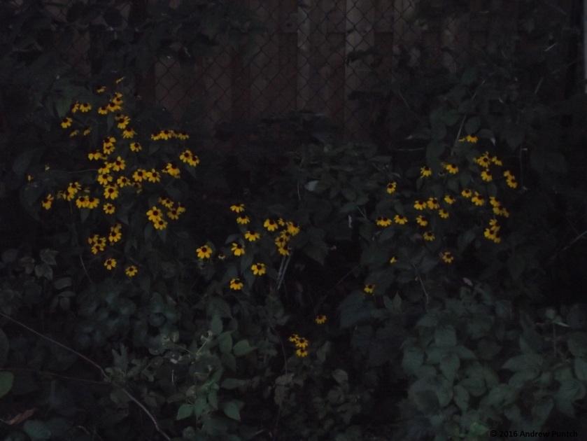 2016-09-flower-2-copy
