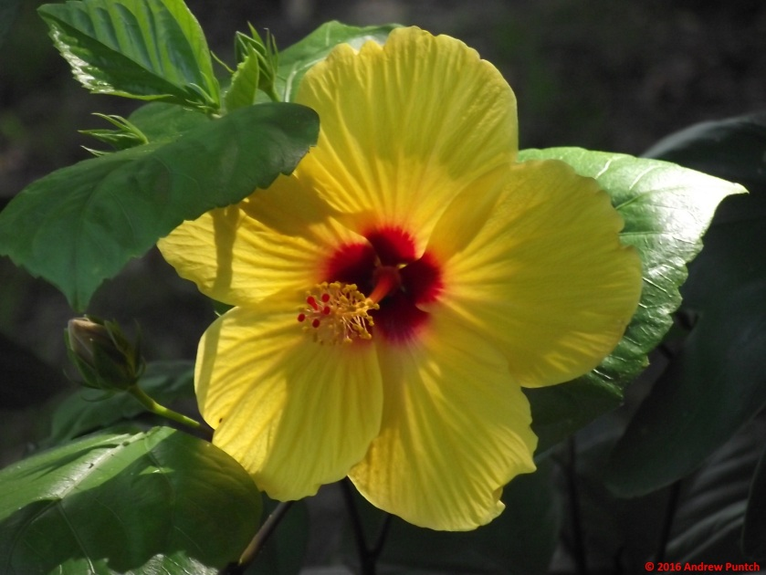 2016-09-flower-copy