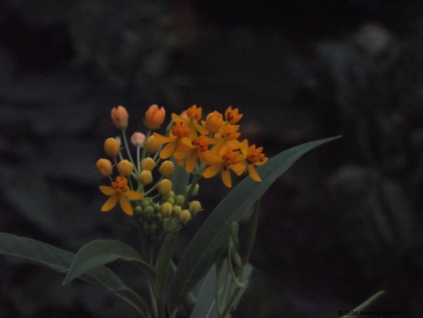 2016-09-flower03-copy