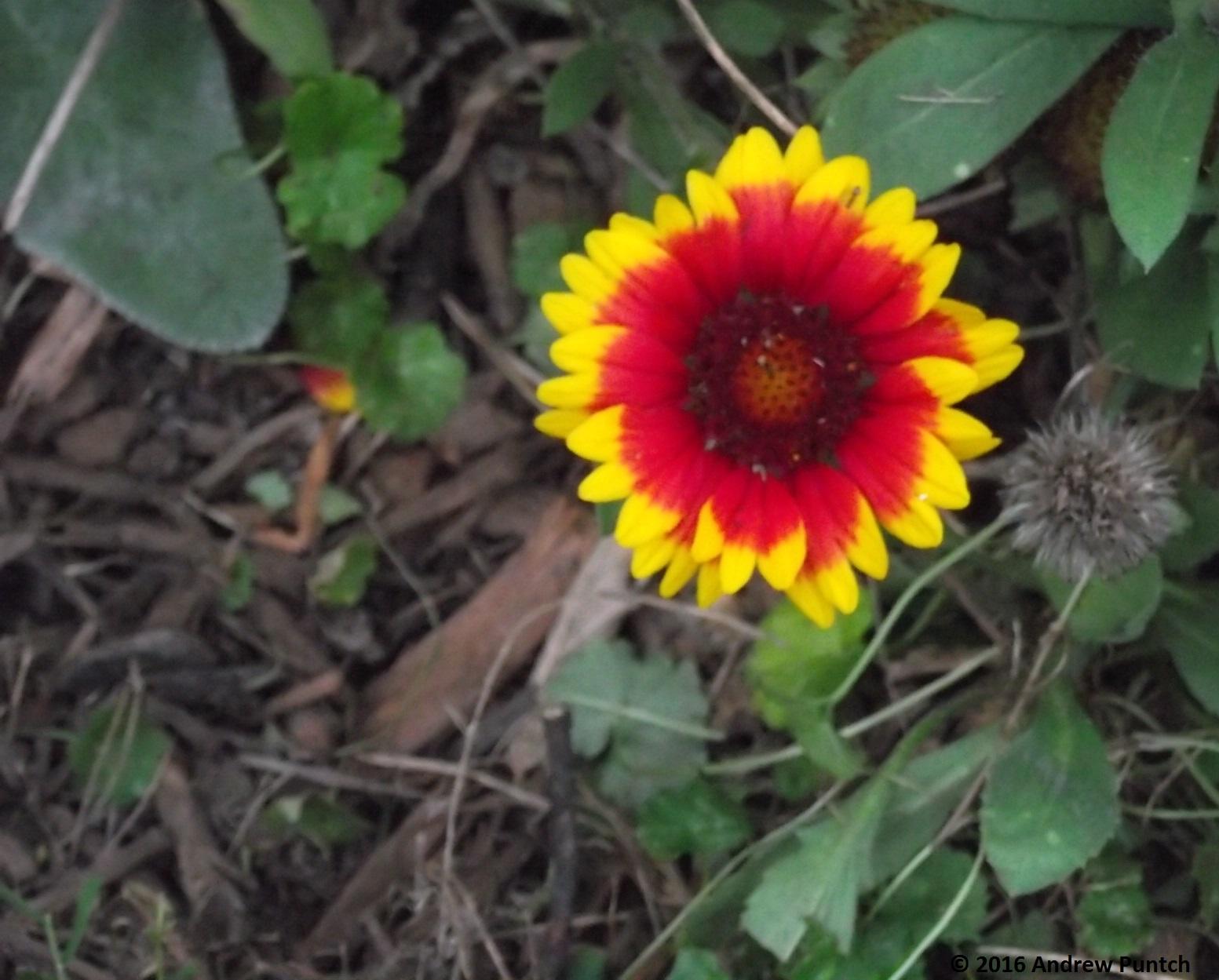 2016-09-flower06-copy