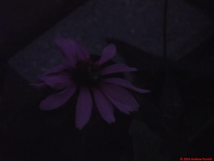 2016-09-flower4-copy