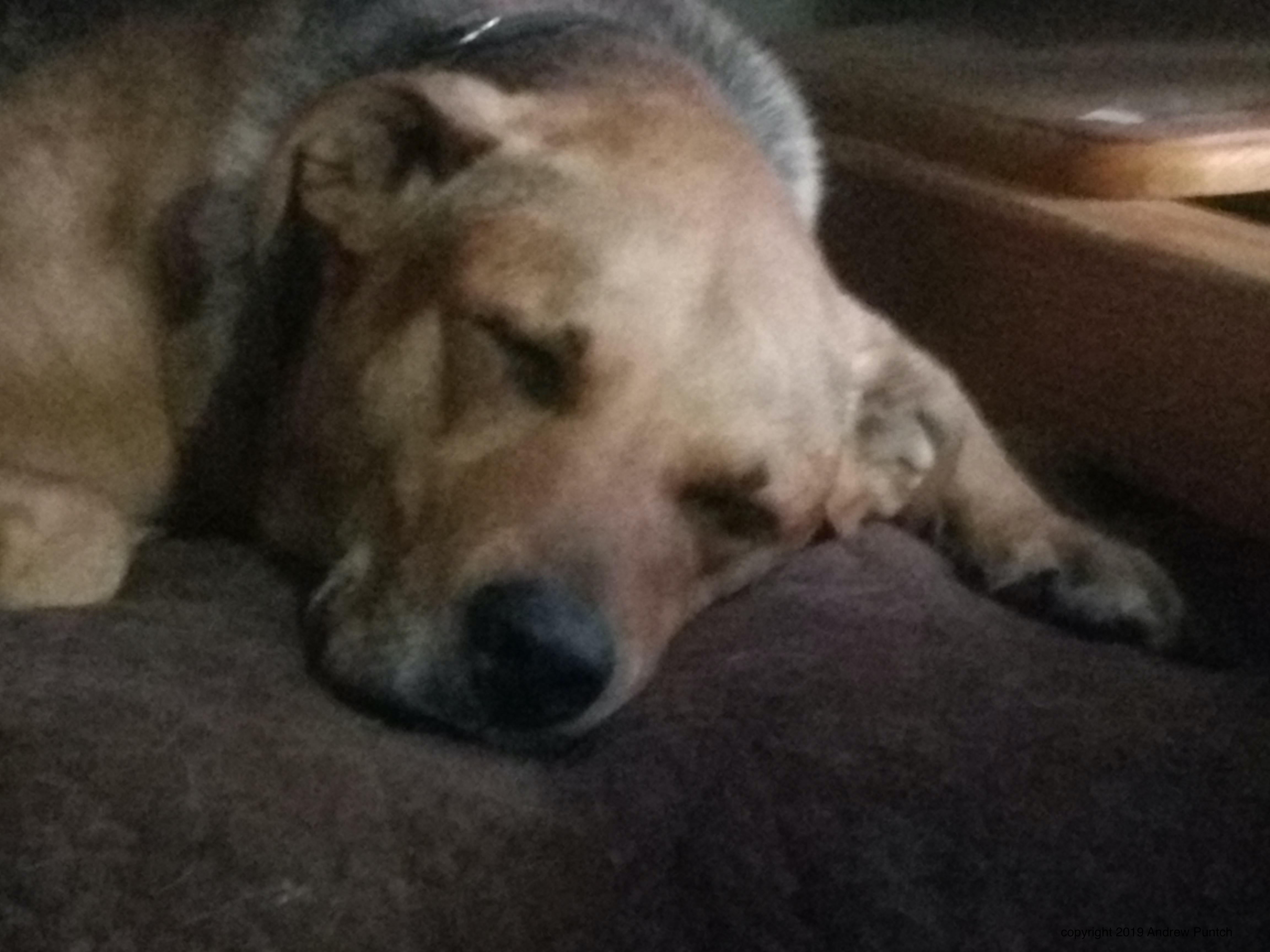 Lucy, sleeping